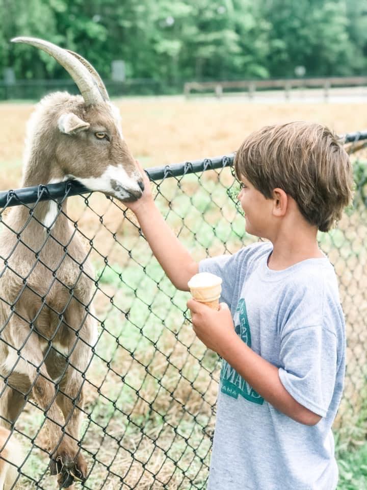 Child Petting Goat At Sweet Creek Farms Market