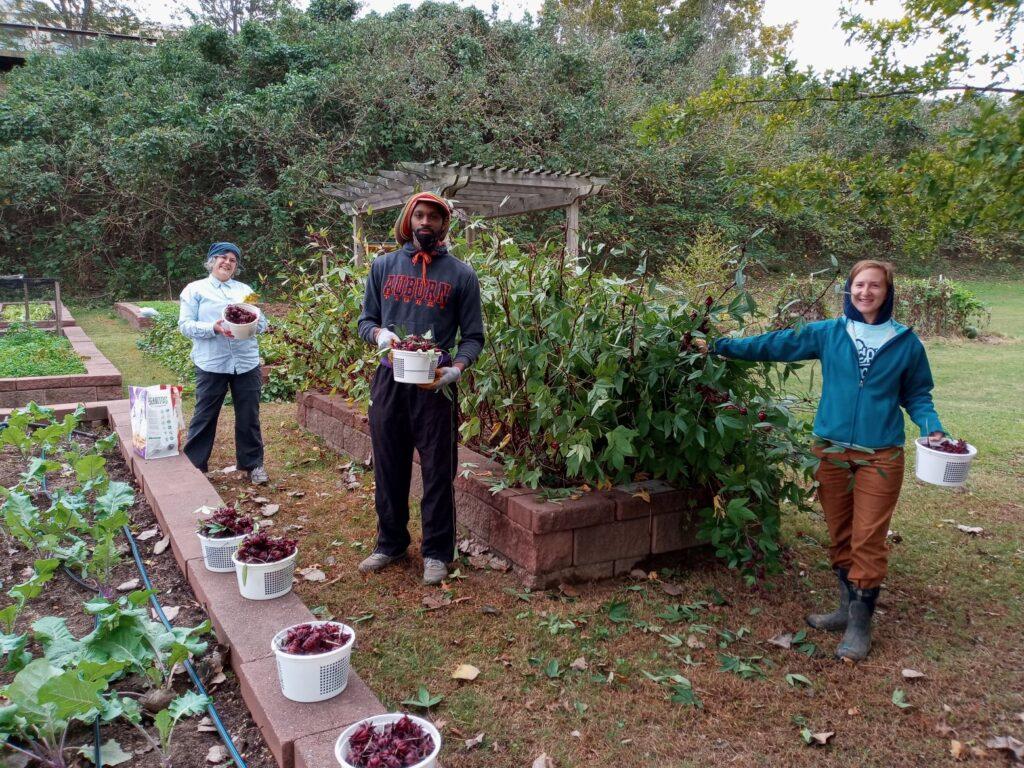 Hibiscus Season At Eat South For Farmers Market Season
