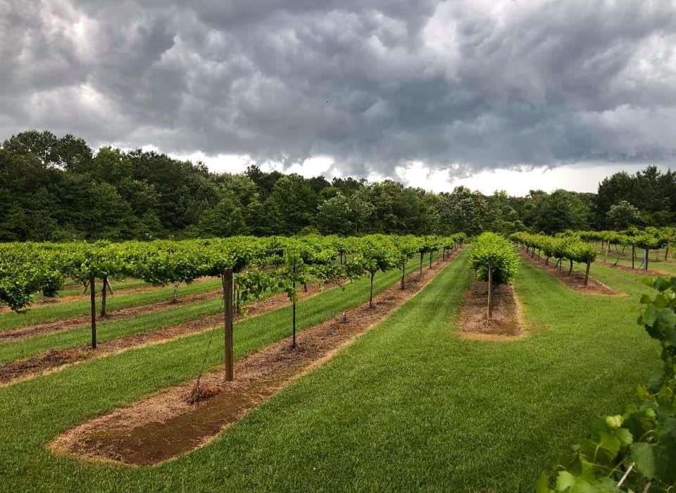 Bryant Vineyards