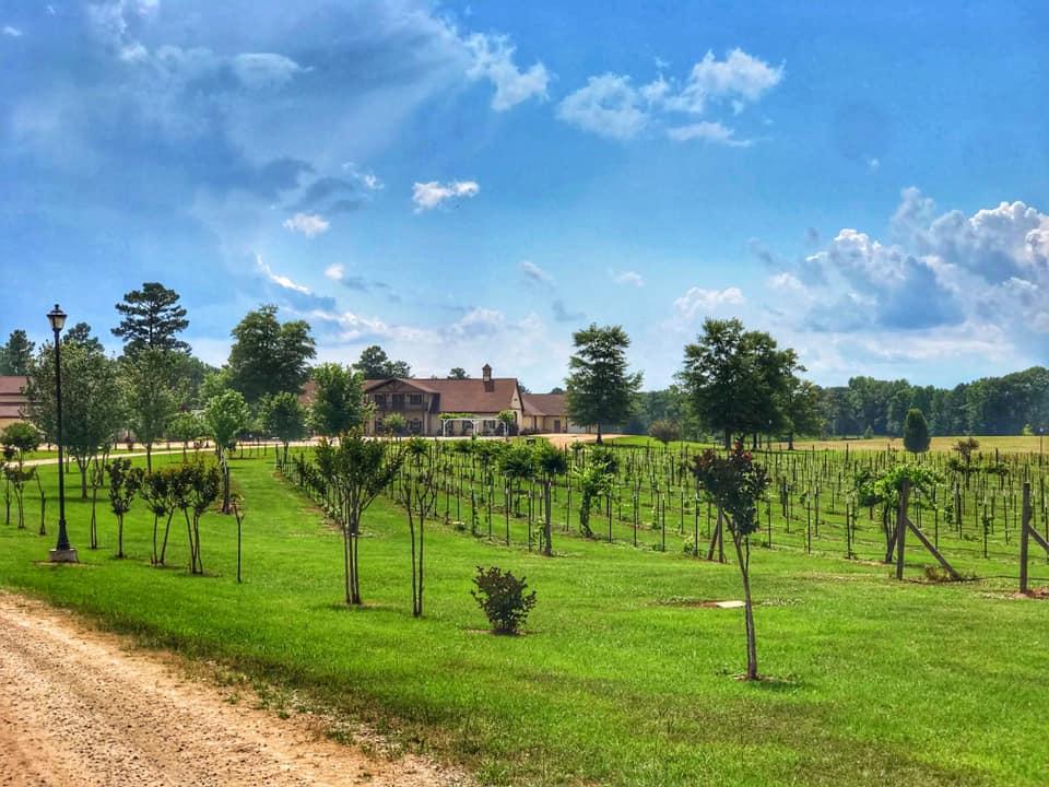 Vineyard At Hodges Vineyard And Winery