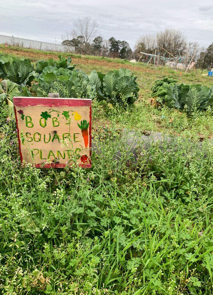 The Community Garden At Auburn University