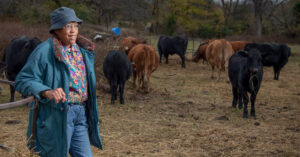 rural Alabama programs