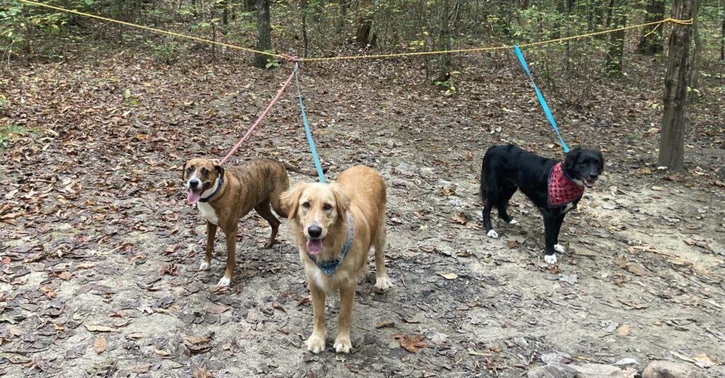 Dog Hikes, Huntsville