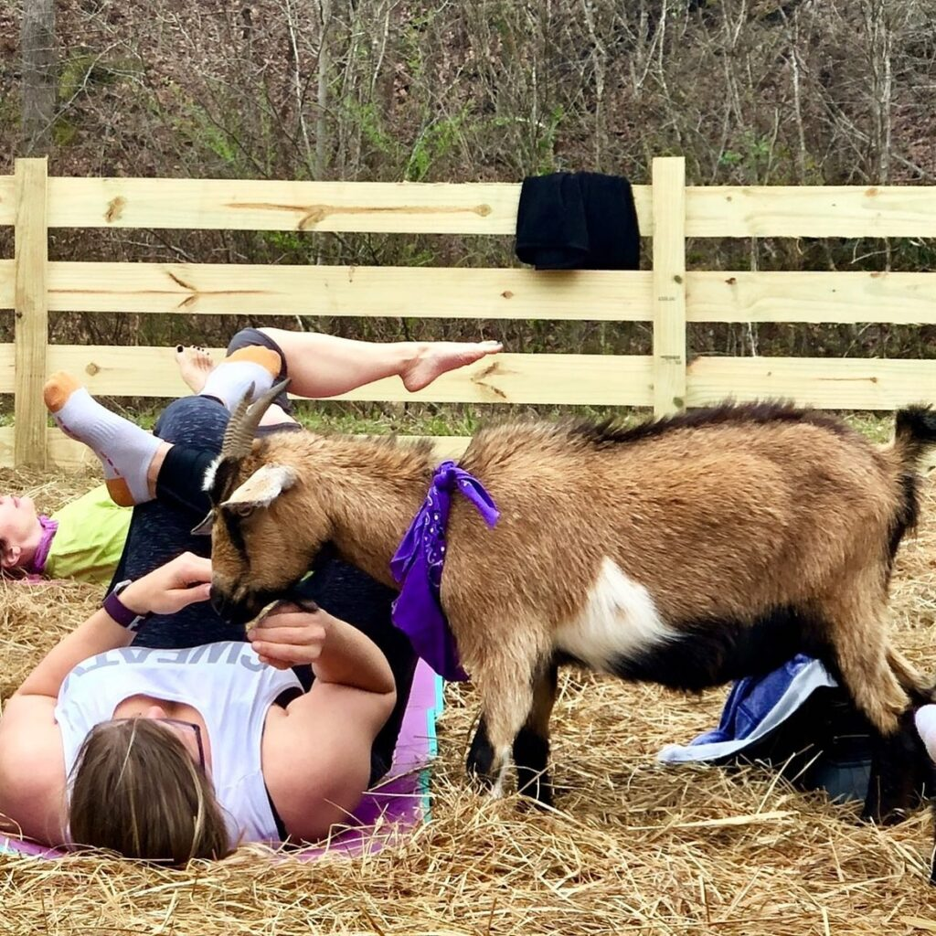 5 places to frolic with goats in Alabaaama