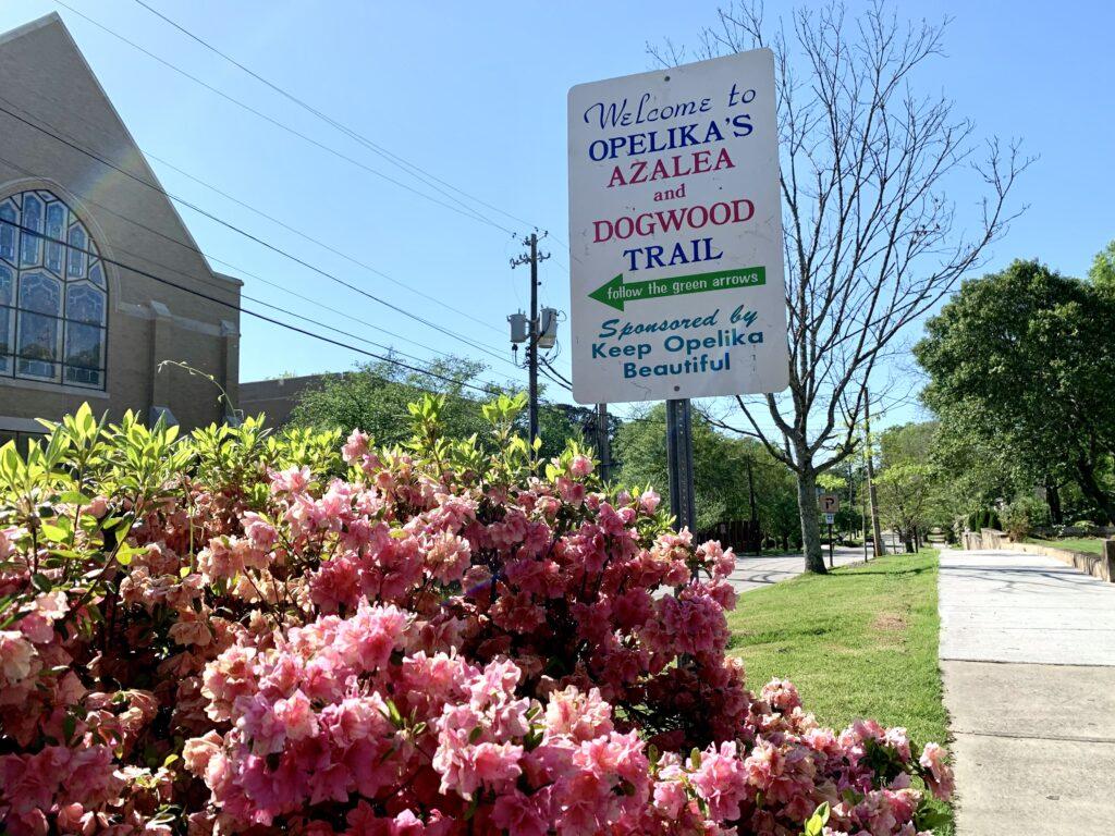 Img 9803 Auburn, Auburn Floral Trail, Auburn University, Azalea Trail, Davis Arboretum, Opelika, Springtime, The Flower Bed, The Flower Store, Town Creek Park