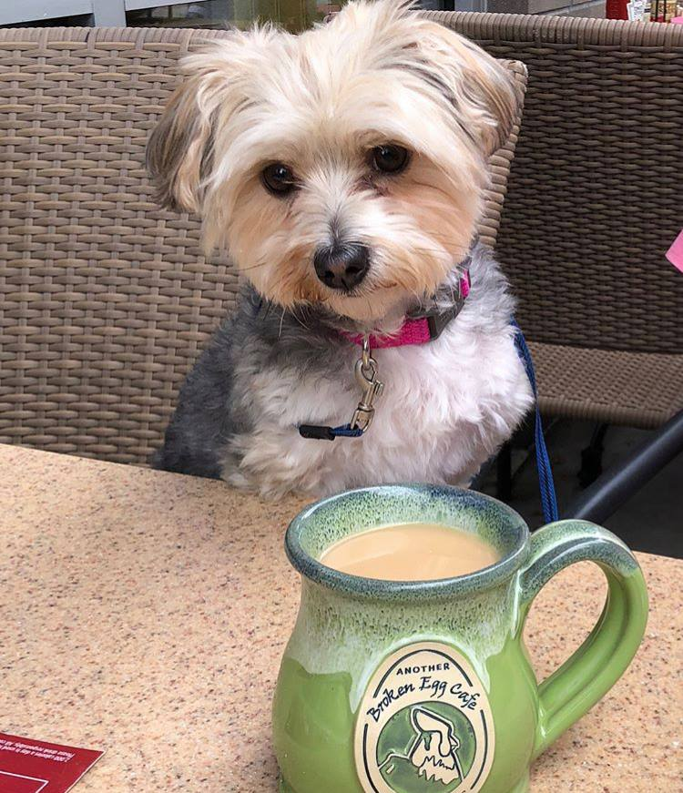 Dog Enjoys Coffee At Another Broken Egg