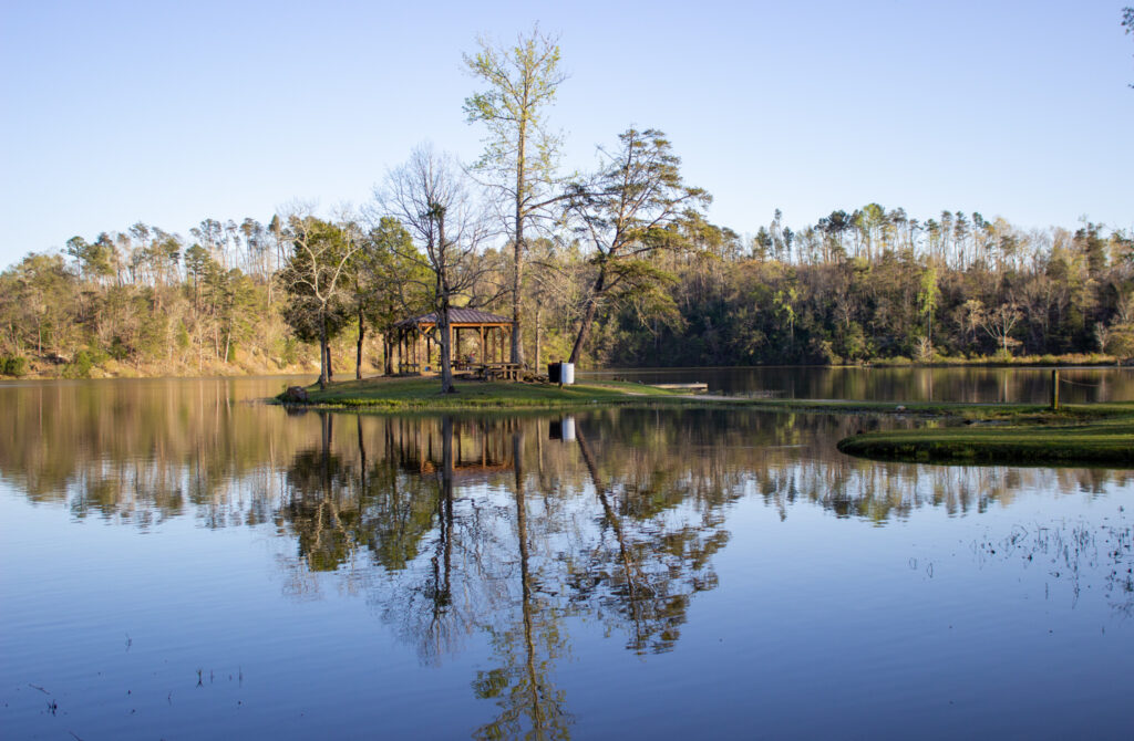 The View From Lake Nicol.