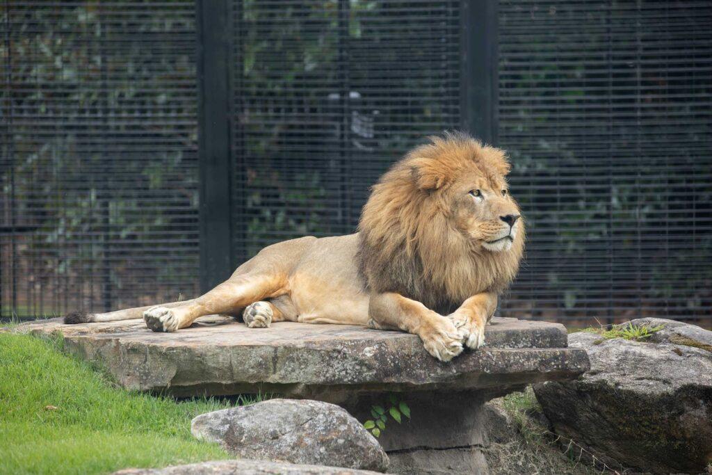 Leo Iii Is Una'S Mascot