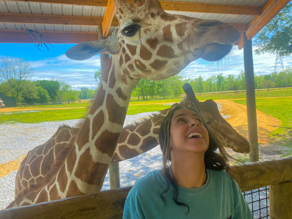 My Alabama Airbnb adventure, with a pit stop at the Alabama Safari Park
