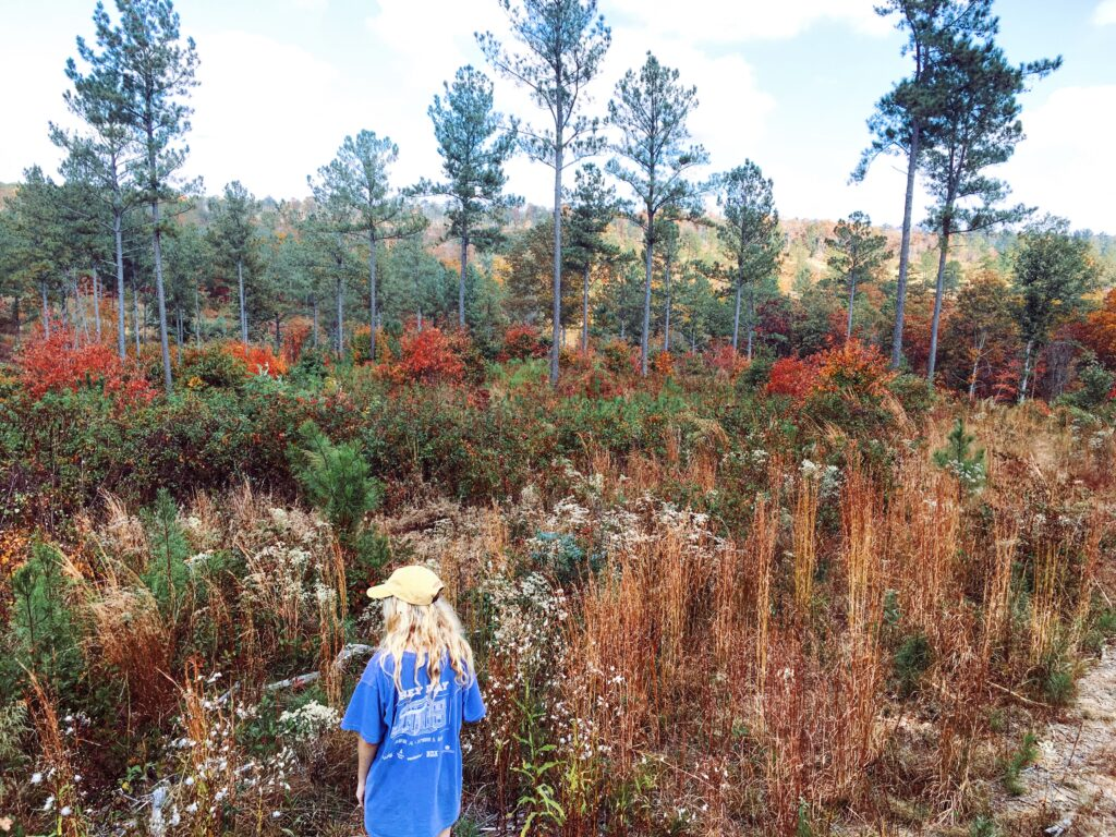 7 of the best hiking trails in Huntsville