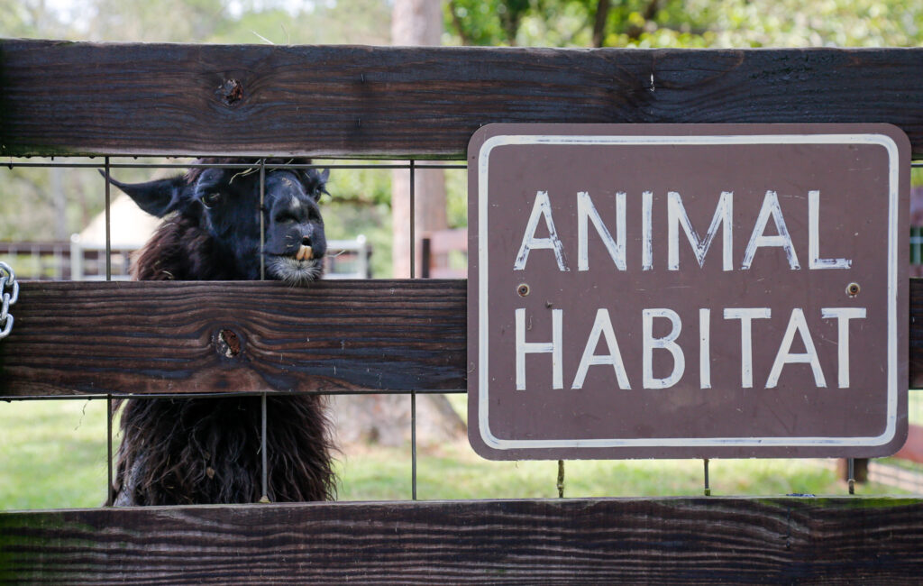 Noccalula Falls animal habitat reopening + free Frios pops